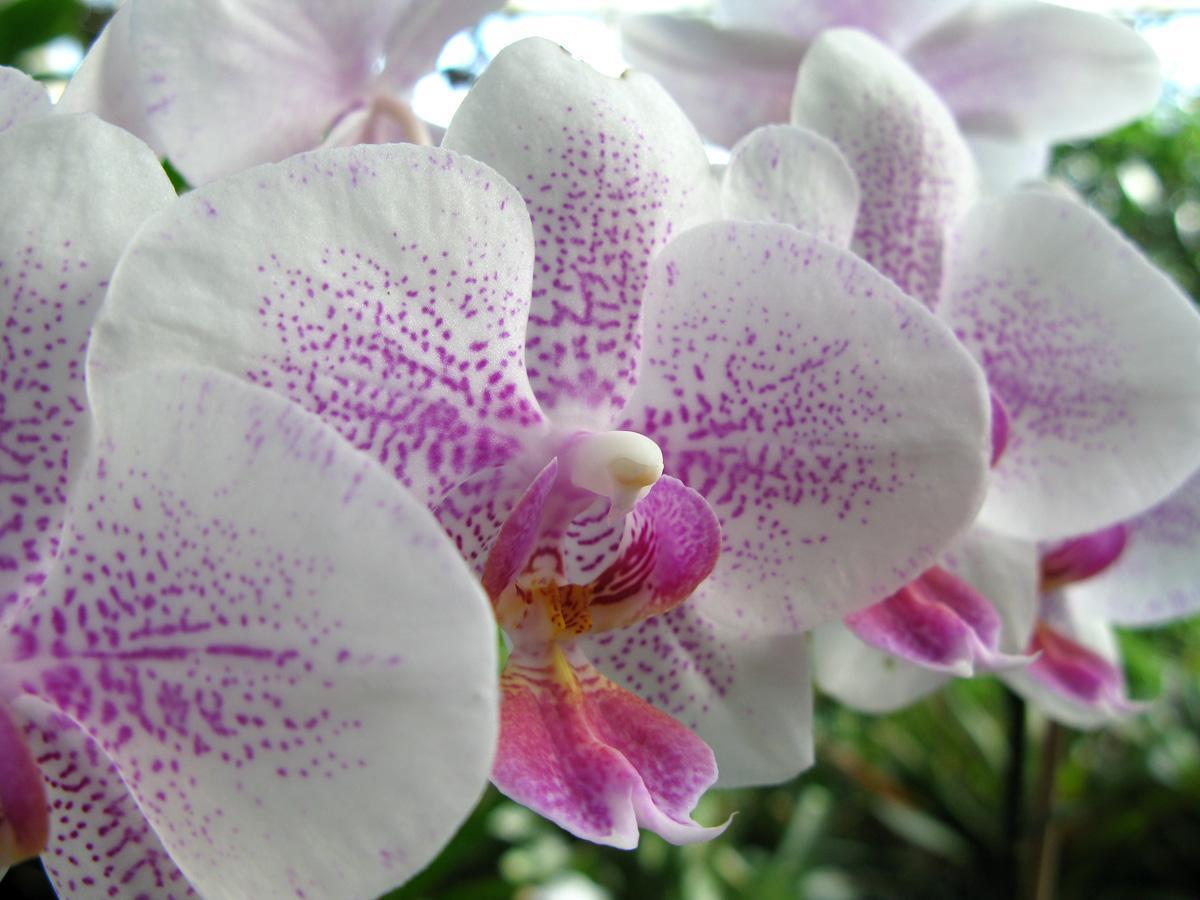 Orchideenblüte aus dem Botanischen Garten Karlsruhe