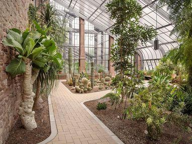 Botanischer Garten Karlsruhe, Pflanzen