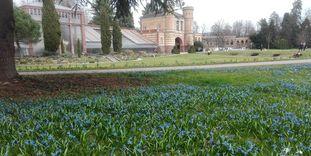Botanischer Garten Karlsruhe, Scillablüte