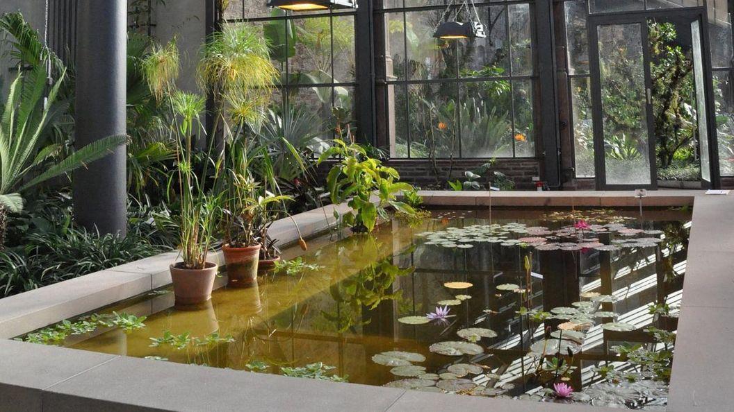 Botanischer Garten Karlsruhe, Palmenhaus, Seerosen-Becken