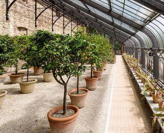 Orangenbäume im Botanischen Garten Karlsruhe