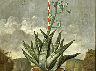 Blooming agave in blue and white pot, painted wainscot, circa 1710, in the Knights' Hall at Weikersheim Palace. Image: Landesmedienzentrum Baden-Württemberg, Arnim Weischer